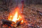 Fire in a autumn forest — Stock Photo