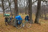 Bicycles in a autumn forest — Stock Photo
