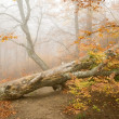 Stock Photo: Mystic forest