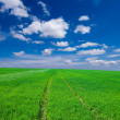 Stock Photo: Green spring field