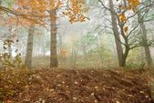 Autumn forest in a myst — Stock Photo