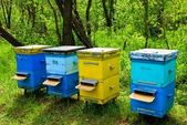 Beehive in a forest — Stock Photo