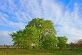 Bel arbre vert parmi une steppe — Photo