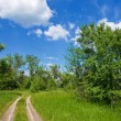 Road in forest — Stock Photo #8010048