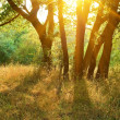 Forest glade in a rays of evening sun — Stock Photo