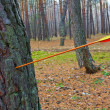 Stock Photo: Arrow hit tree