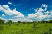 Summer plain landscape — Stock Photo
