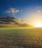 Sunset among a fields — Stock Photo