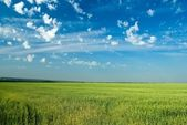 Beautiful green field panorama — Stock Photo