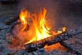 Fire in a forest — Stock Photo