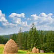Stock Photo: Haystacks on mountain pasture