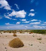 Dry sandy desert — Stock Photo