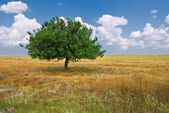 Alone green tree in a steppe — Stock Photo