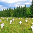 Old cemetery in forest glade — Stock Photo #8077256