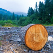 Pine log on forest glade — Stock Photo #8077804