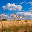 Stock Photo: Summer steppe