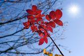 Character of autumn — Stock Photo