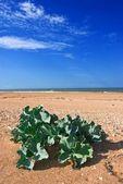 Small bush on a sea coast — Stock Photo