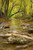 Small brook — Stockfoto