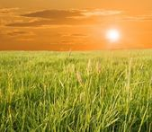 Evening in a steppe — Stock Photo