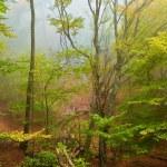Quiet autumn forest in a mist — Stock Photo #8082164