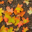 Stock Photo: Varicoloured autumn leaves background