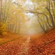 Red fallen leaves in a autumn forest — Stock Photo