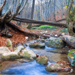 Stock Photo: Autumn mountain river