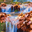 Closeup small brook among an autumn leaves — Stock Photo #8082658