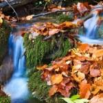 Small autumn brook — Stock Photo