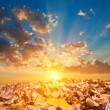 Autumn leaves in a rays of a sunset — Stock Photo