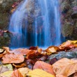 Closeup autumn leaves on a falling water background — Stock Photo