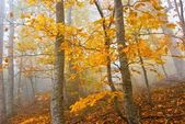 Red beach in a misty forest — Stock Photo