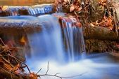 Small blue brook among a leaves — Stock Photo