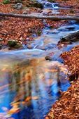 Small blue puddle in a autumn forest — Stock Photo