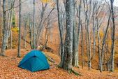 Green touristic tent in a autumn forest — ストック写真