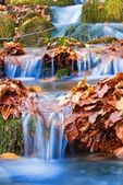 Closeup small brook among an autumn leaves — Stock Photo