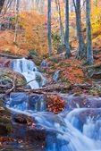山の川と秋の森 — ストック写真