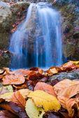 Foglie d'autunno closeup su uno sfondo di acqua che cade — Foto Stock