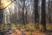 Autumn forest at the evening — Stock Photo