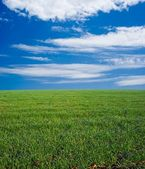 Groen veld onder een hemel en wolken — Stockfoto