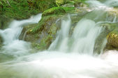 Stream of water in the middle of mosses — Stock Photo