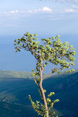 Single tree on a precipice — Stock Photo