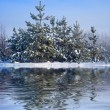 Winter forest reflected in a water — Stock Photo
