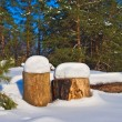 Stock Photo: Snowbound pine logs in a wunter forest