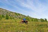 Horse on a mountain pasture — 图库照片