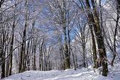 冬季冰天雪地森林 — 图库照片