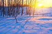Večerní zimní scéna — Stock fotografie