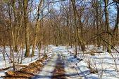 Wald im schnee — Stockfoto