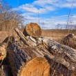 Heap of logs in forest glade — Stock Photo #8147563